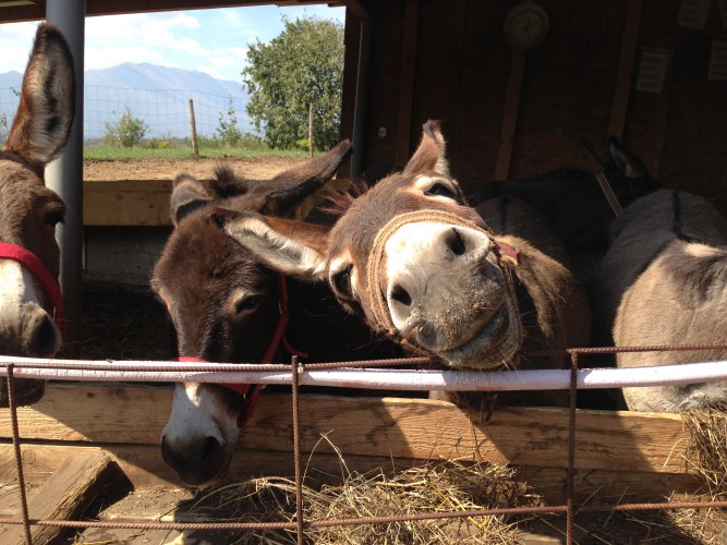 Martinici donkey farm in Lonely Planet